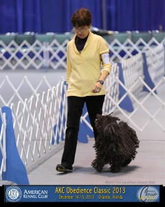 Dog Show Image from AKC Obedience Classic, December 2013